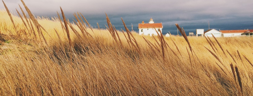 field of sea grass with lighthouse in the background