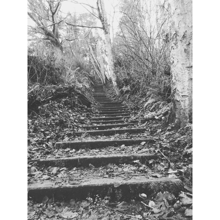 Wood stairs going up through the woods