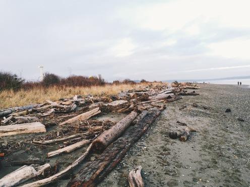 driftwood along beach point no point hansville washington