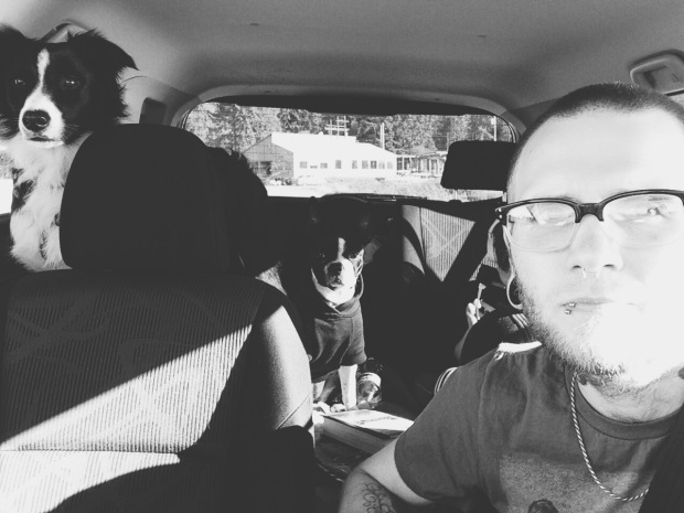 guy in car with dogs in backseat